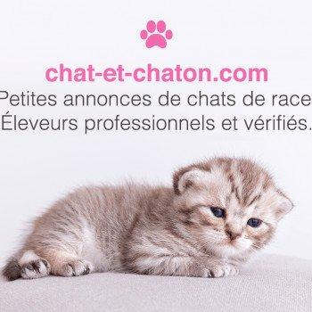 Chaton A Vendre Suisse Chat Et Chaton Com
